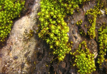 How to Make Moss Green Color