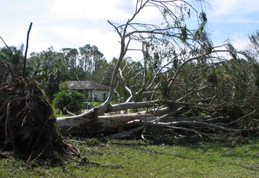 Homeowner's Insurance and Tree Damage to a Neighbor's Property