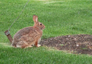 Plant Food for Rabbits