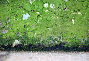 Definition of Mold Remediation