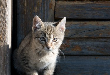 What Are Some Feline Pain Medications?