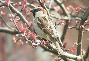 How Do Sparrows Serve in the Ecosystem?
