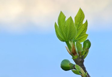What Time of Year Do You Plant Fruit Trees in Louisiana?