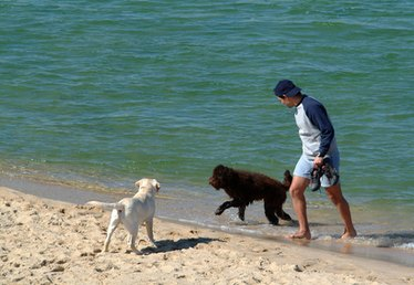 Pet Friendly Hotels on Florida Beaches