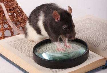How to Build Homemade Live Rat Traps