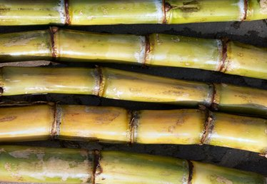 How to Grow Sugar Cane in Georgia
