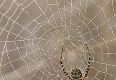 How to Make Spider Webbing Out of Hot Glue