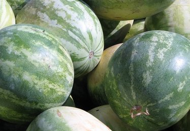 How to Grow Ice Box Watermelons