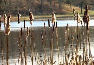 Herbicides That Kill Cattail