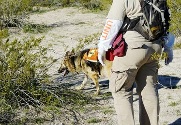Search & Rescue Dog Training Schools