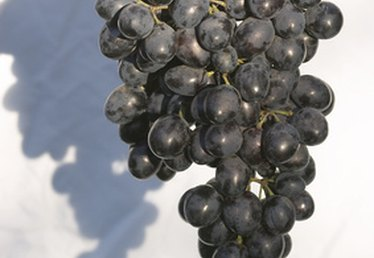 How to Dry Concord Grapes