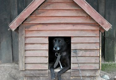 How to Build an Extra Large Dog House