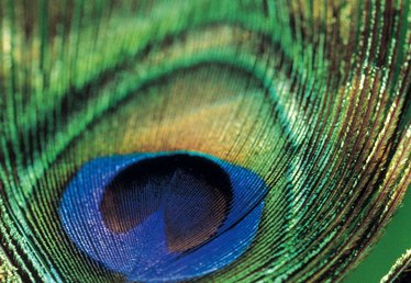 How to Make Paper Peacock Feathers