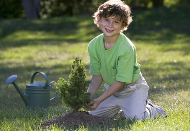 Government Grants for Planting Trees