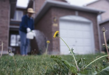 When to Put Weed Killer on a Lawn