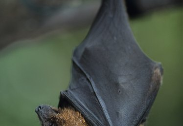 How to Prevent Bats From Hiding Under a Porch Awning