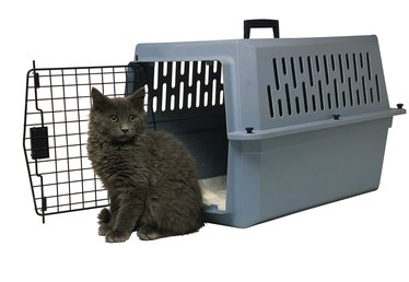 How to Start a Cattery Business