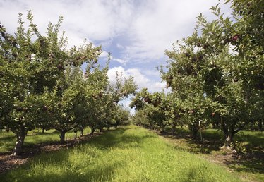 Fruit Trees That Grow in North Florida