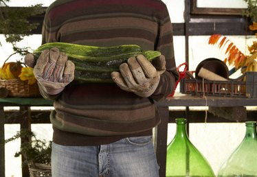What to Do With an Overgrown Zucchini