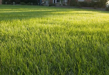 Why Is My New Lawn So Patchy?