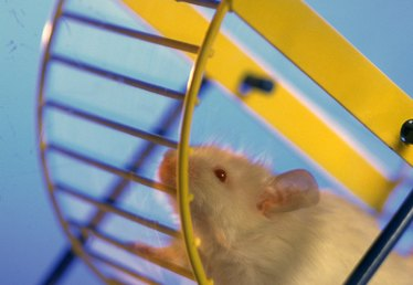 How to Make a Hamster Wheel Stop Making Noise
