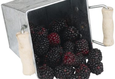 How to Raise Blackberries for a Profit