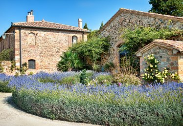 Types of Plants for a Tuscan Garden