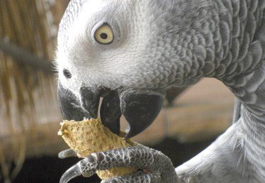 List of Foods That an African Grey Parrot Can Eat