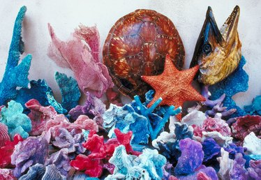 How to Make a Starfish Craft