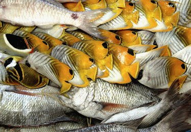 How Much Protein Does Fish Have?
