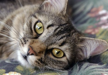 The Best Source of Omega 3 for Cats
