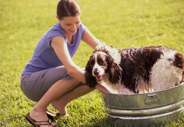 Home Remedy for Mosquito Repellent for Dogs