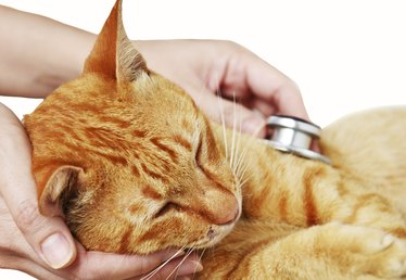 Bacteria Infections in Cats