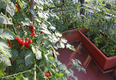 How to Grow a Balcony Garden