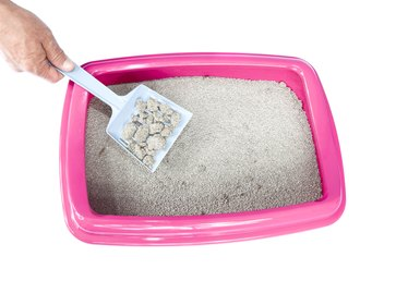 How to Prevent Cat Litter Dust