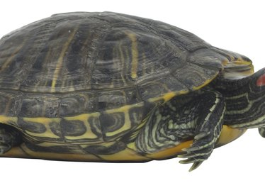How to Make a Turtle Model