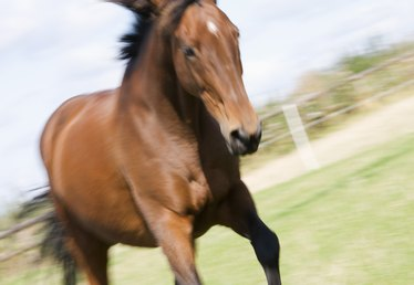 The Average Salary of an Equine Physical Therapist
