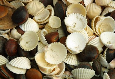 How to Add Seashells to a Wall