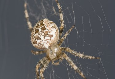How to Get Rid of Spider Webs & Nests in Eaves