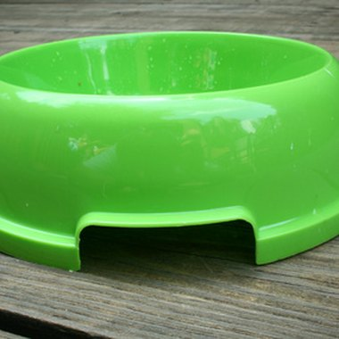 Don't forget to pack a pet bowl to use at the Silver Springs Nature Park.