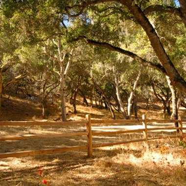 Carmel Valley offers wooded hiking trails.