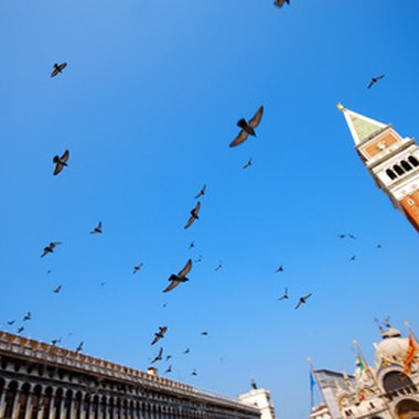 Venice's famous pigeons fly over St. Mark's Square.