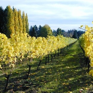 Springfield is in the heart of the Willamette Valley, Oregon's wine country.