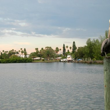 The Tampa Bay area offers a wide array of recreational activities.
