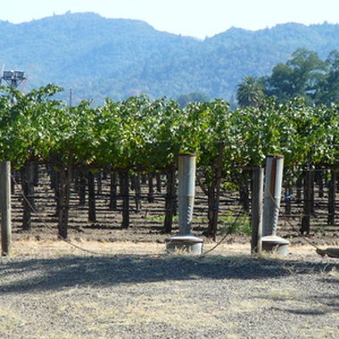 Visit the vineyards of Napa and stay in one of the many resorts or hotels.