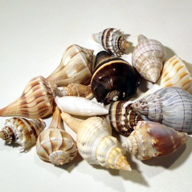 Sanibel Island, famous for its shells, lies just west of Fort Myers.