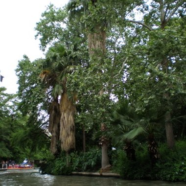 Visitors experience San Antonio's River Walk on foot or by water taxi.