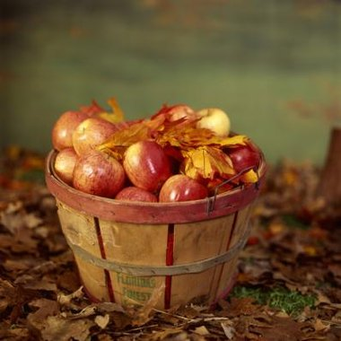 Picking apples provides the chance to enjoy eating some fresh fruit.
