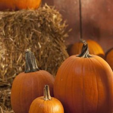 Pumpkins are a common sight at fall festivals.