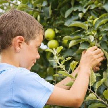 Visit an apple orchard, and pick your own apples with the kids.